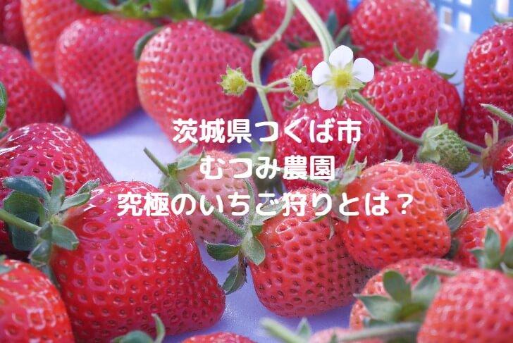 茨城県つくば市むつみ農園のいちご狩りのヘッダー写真