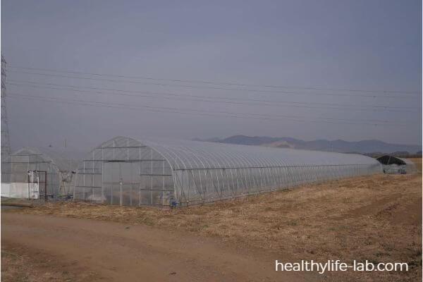 むつみ農園の全体写真